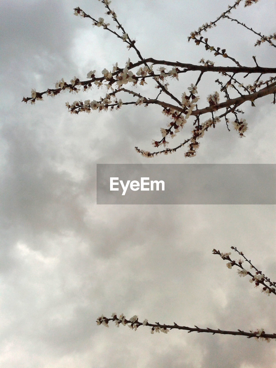 cloud - sky, sky, plant, tree, branch, low angle view, beauty in nature, nature, day, no people, tranquility, growth, flower, outdoors, flowering plant, blossom, twig, freshness, springtime, cherry blossom, spring, cherry tree