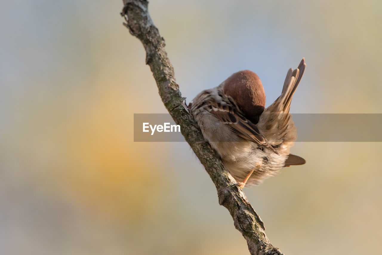 animals in the wild, animal wildlife, animal, animal themes, branch, bird, vertebrate, one animal, focus on foreground, perching, tree, nature, no people, plant, day, close-up, low angle view, outdoors, twig, selective focus