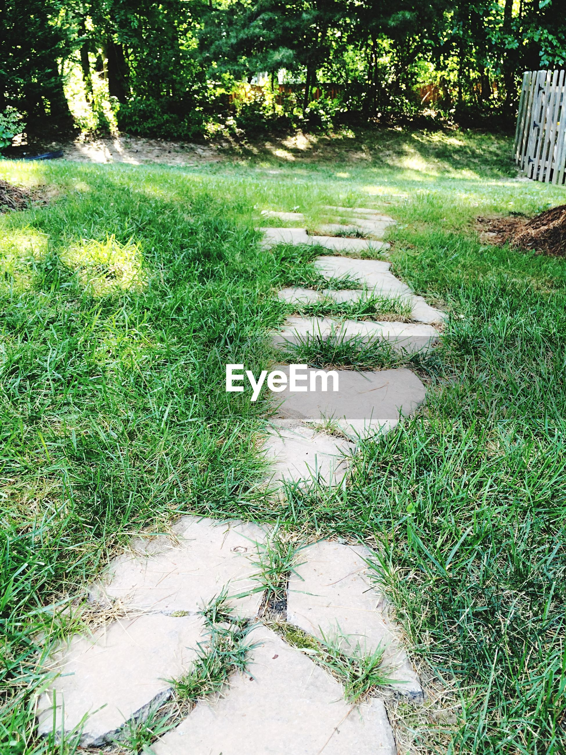 Pathway amidst grassy field