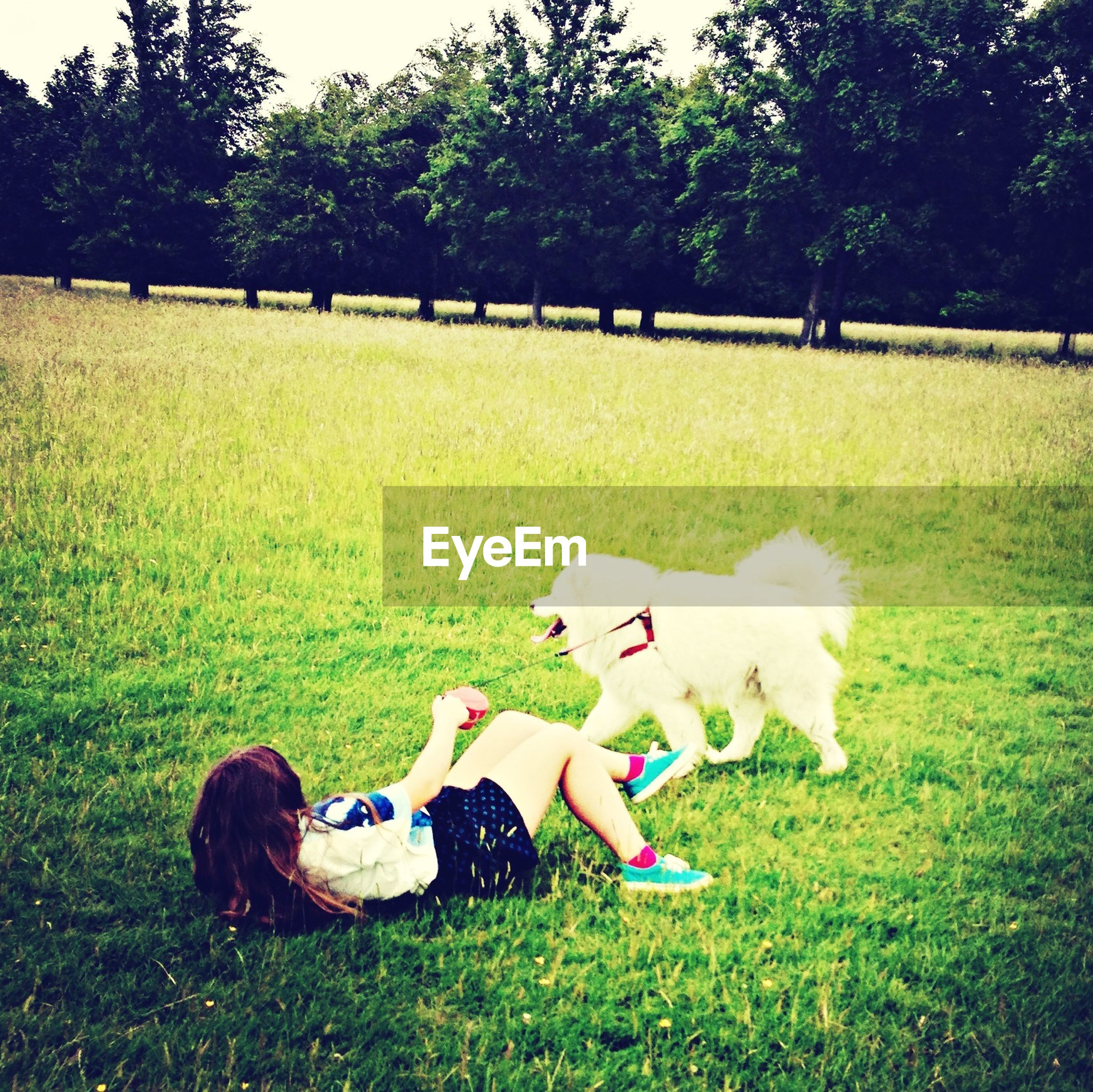 grass, grassy, field, leisure activity, lifestyles, green color, relaxation, sitting, tree, person, park - man made space, men, lawn, domestic animals, grassland, relaxing, togetherness, dog