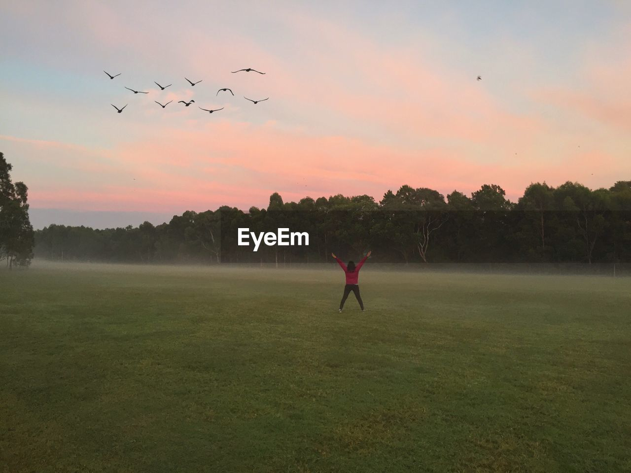 Silhouette Flock Of Birds Flying Over Woman Standing At Park During Foggy Sunrise