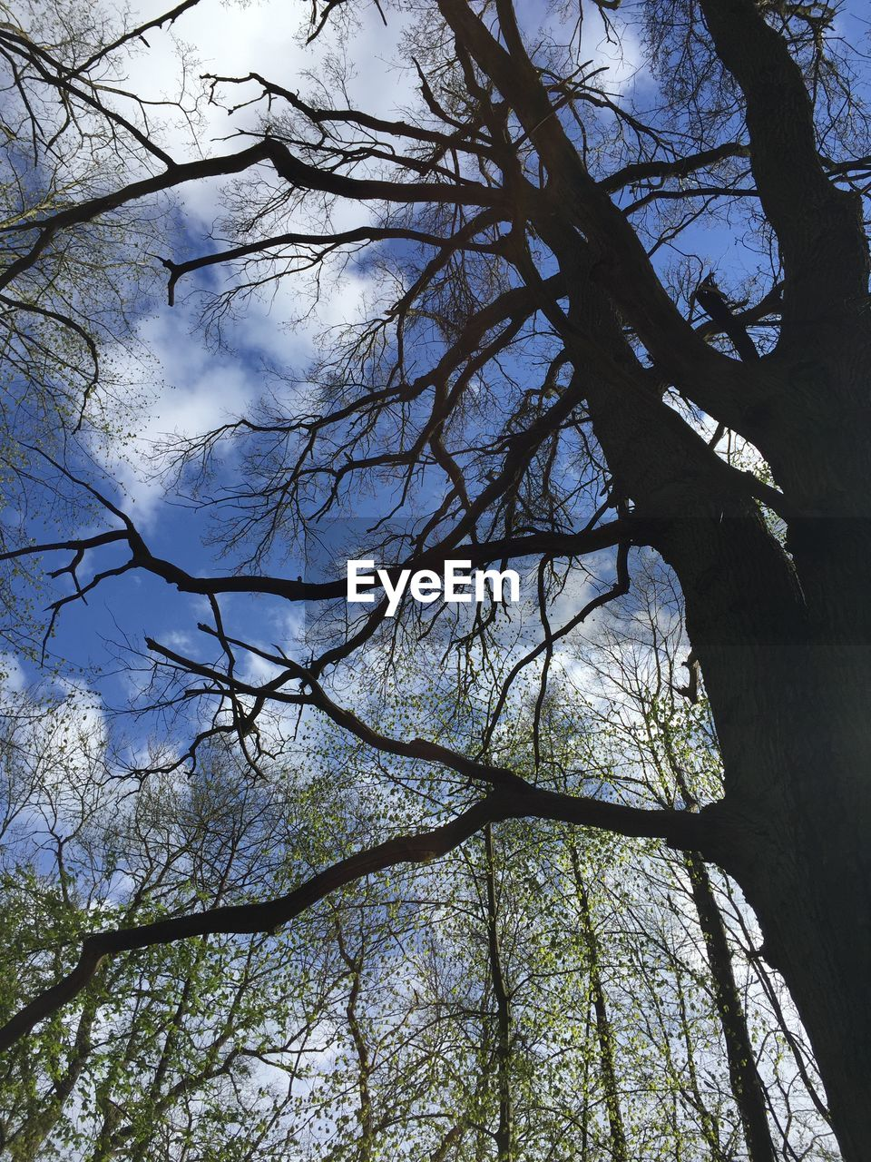 tree, low angle view, branch, nature, beauty in nature, day, tranquility, no people, outdoors, growth, bare tree, forest, sky, tree trunk, scenics