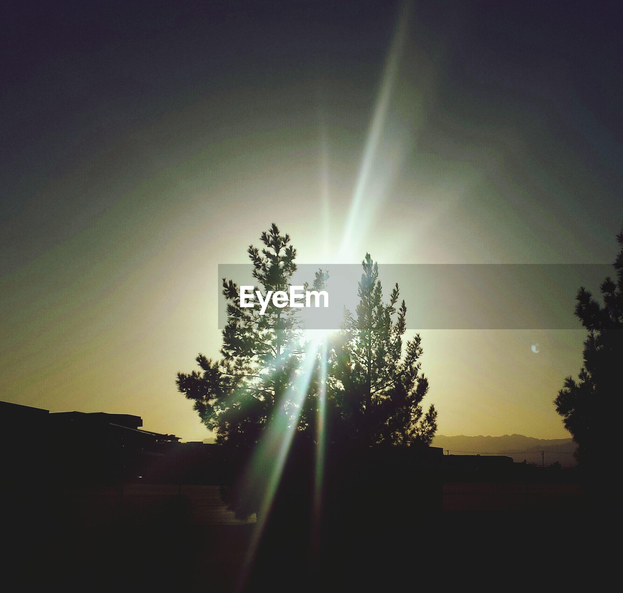 Sunbeam emitting amidst trees against sky
