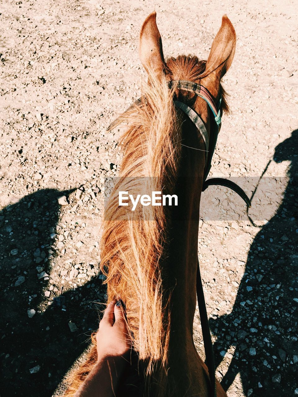 High angle view of horse on ground