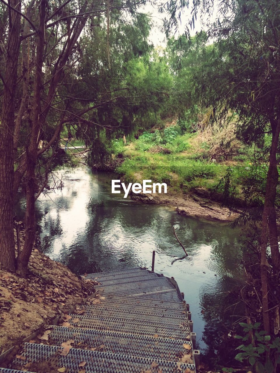 tree, forest, nature, water, river, tranquil scene, day, tranquility, beauty in nature, footbridge, outdoors, scenics, no people