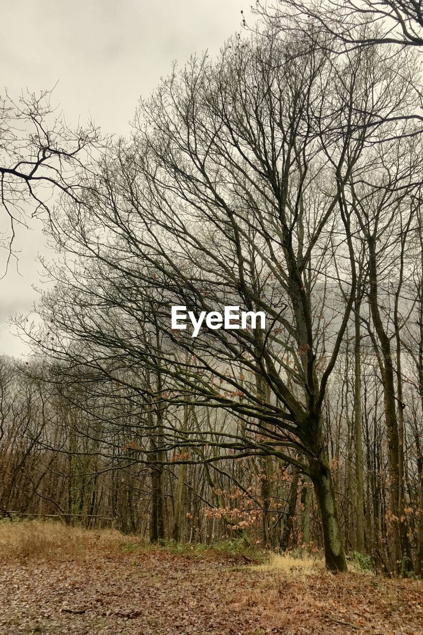 tree, bare tree, sky, tranquility, nature, land, plant, no people, forest, landscape, tranquil scene, environment, non-urban scene, scenics - nature, day, outdoors, field, branch, beauty in nature, cloud - sky