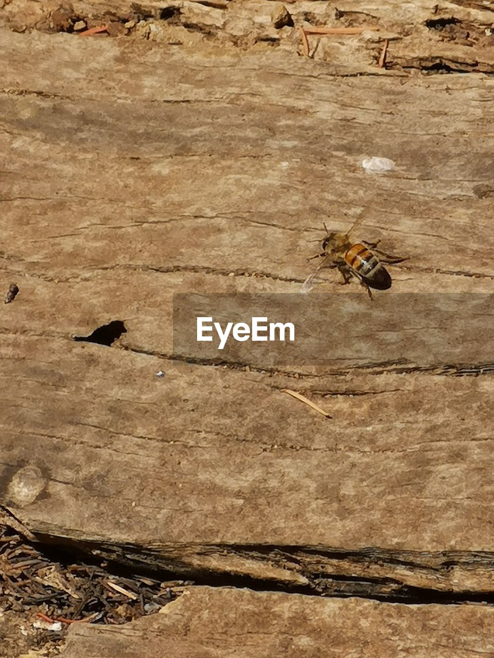 HIGH ANGLE VIEW OF BEE ON A WOOD
