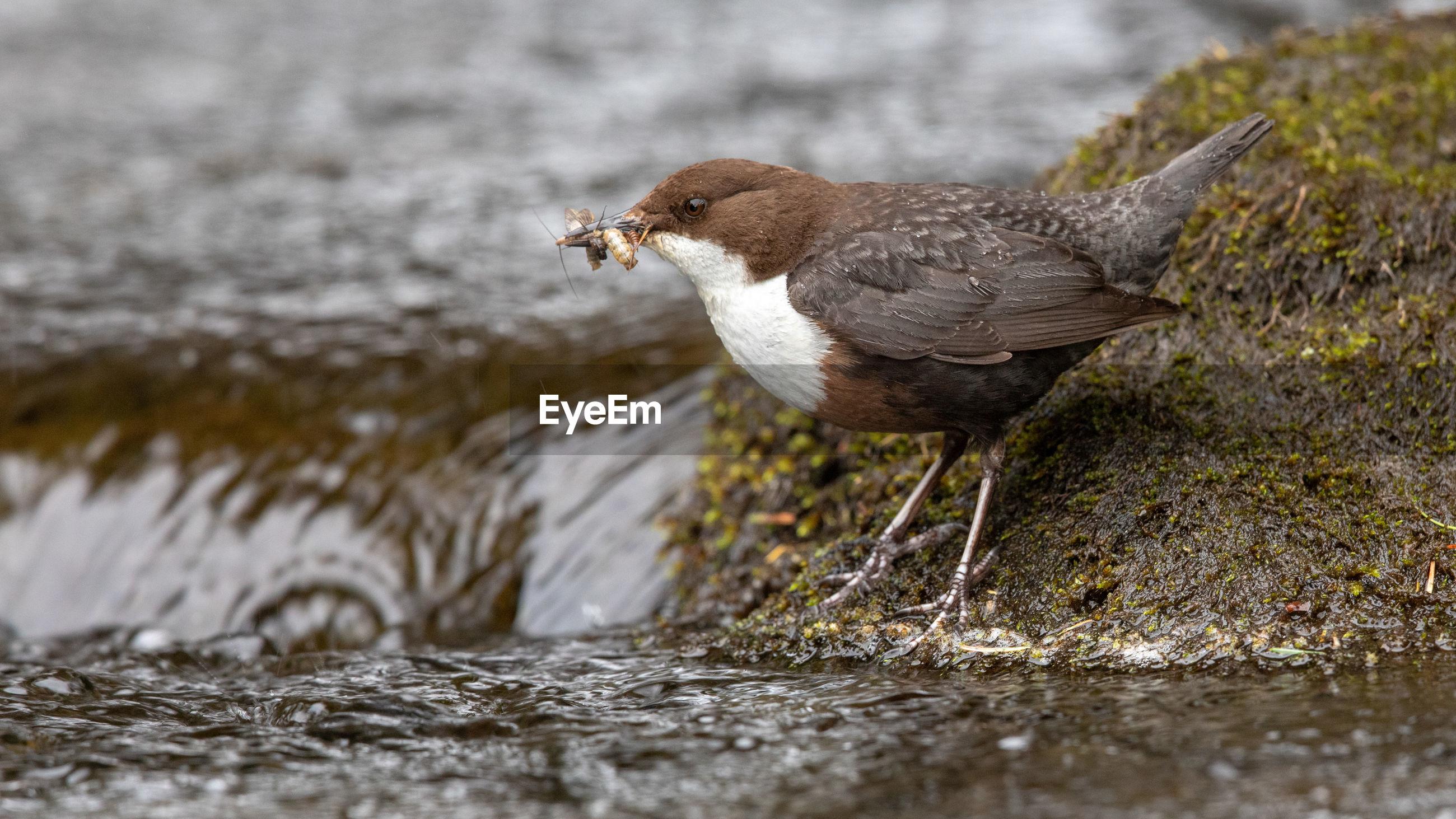 Close-up of bird perching on rock at stream
