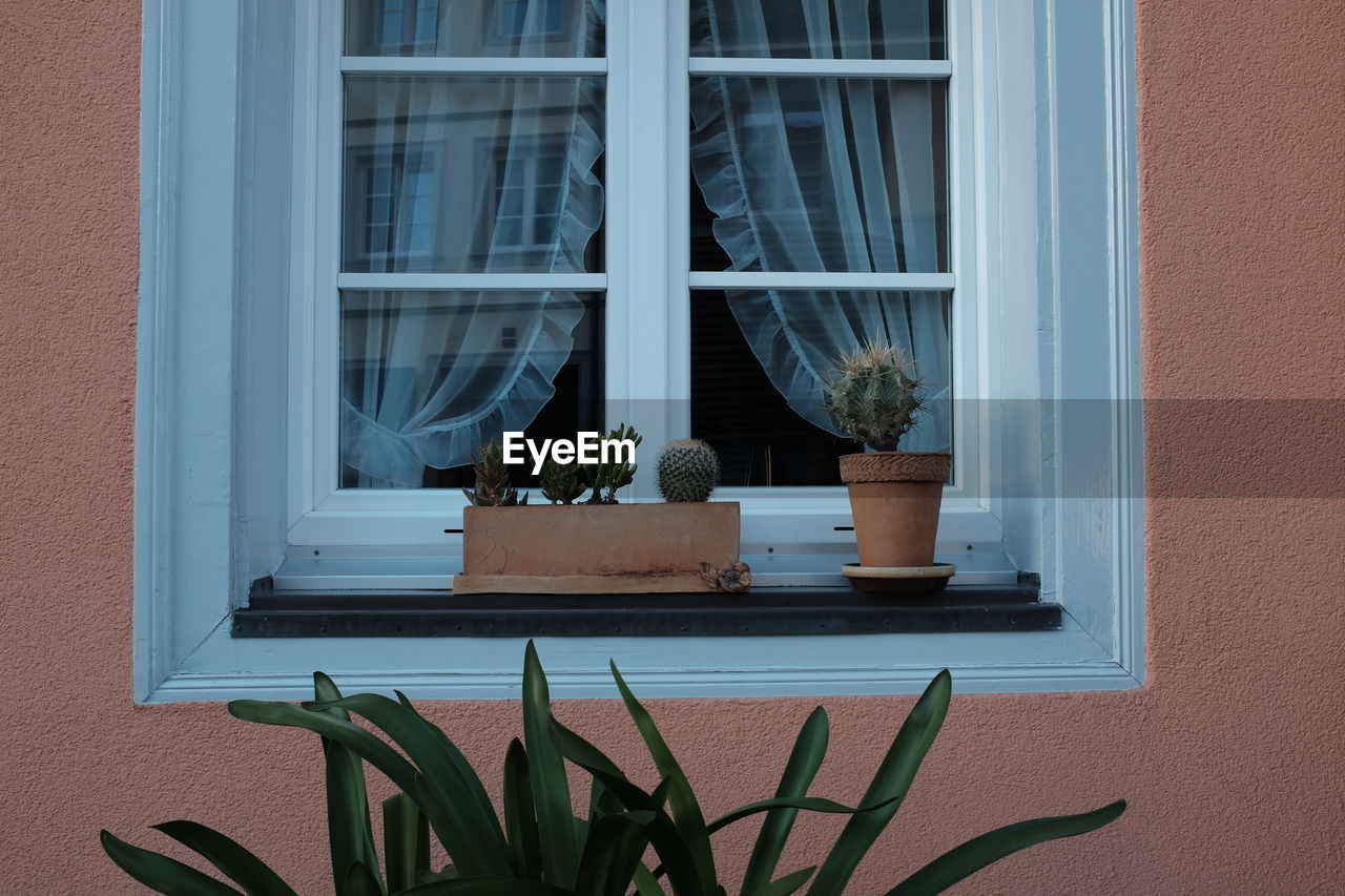 window, potted plant, plant, built structure, building exterior, architecture, growth, no people, window sill, nature, glass - material, day, building, succulent plant, transparent, cactus, wall - building feature, outdoors, green color, house, houseplant, flower pot, window frame, window box
