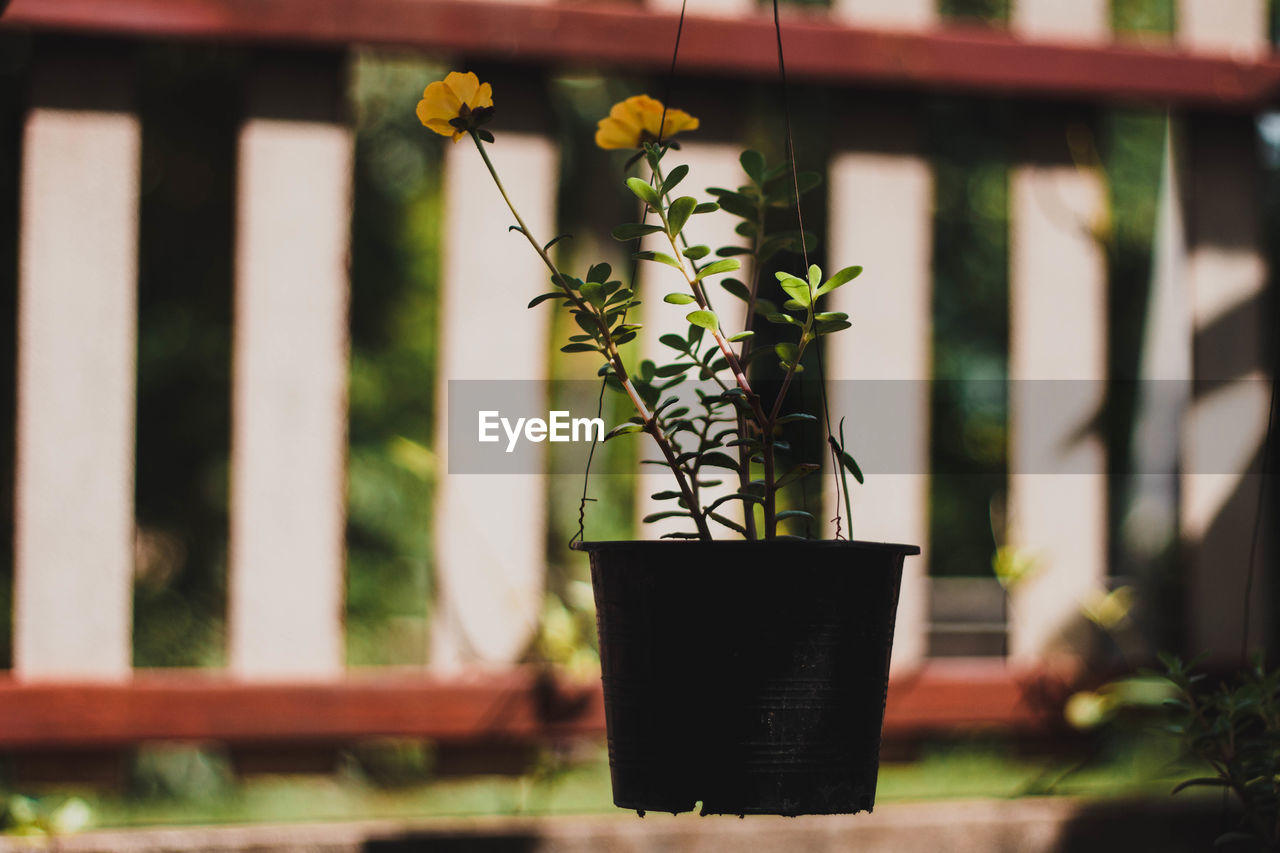 plant, growth, focus on foreground, flower, flowering plant, beauty in nature, day, no people, potted plant, nature, architecture, built structure, outdoors, close-up, fragility, vulnerability, building exterior, plant part, freshness, selective focus, flower pot, flower head, houseplant