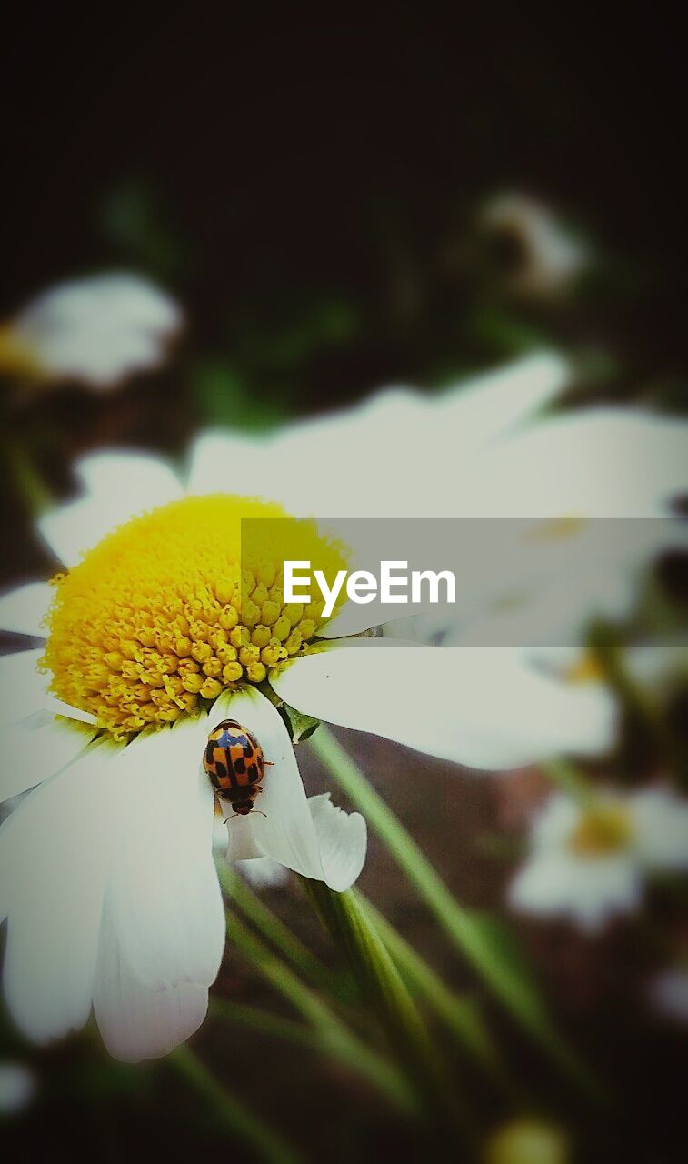 flower, petal, fragility, nature, beauty in nature, insect, yellow, growth, freshness, no people, one animal, flower head, animal themes, close-up, plant, outdoors, day, animals in the wild, blooming