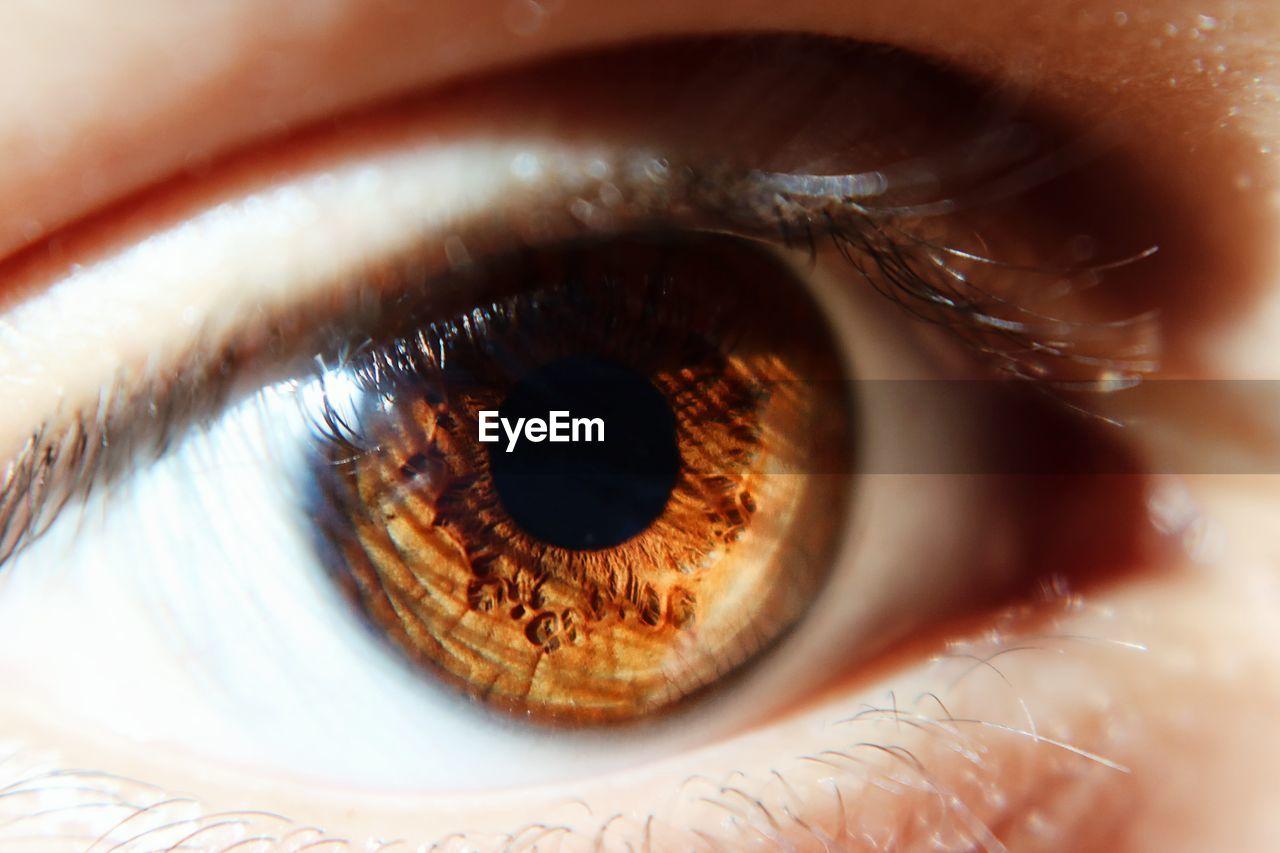 Extreme Close Up Of Human Eye