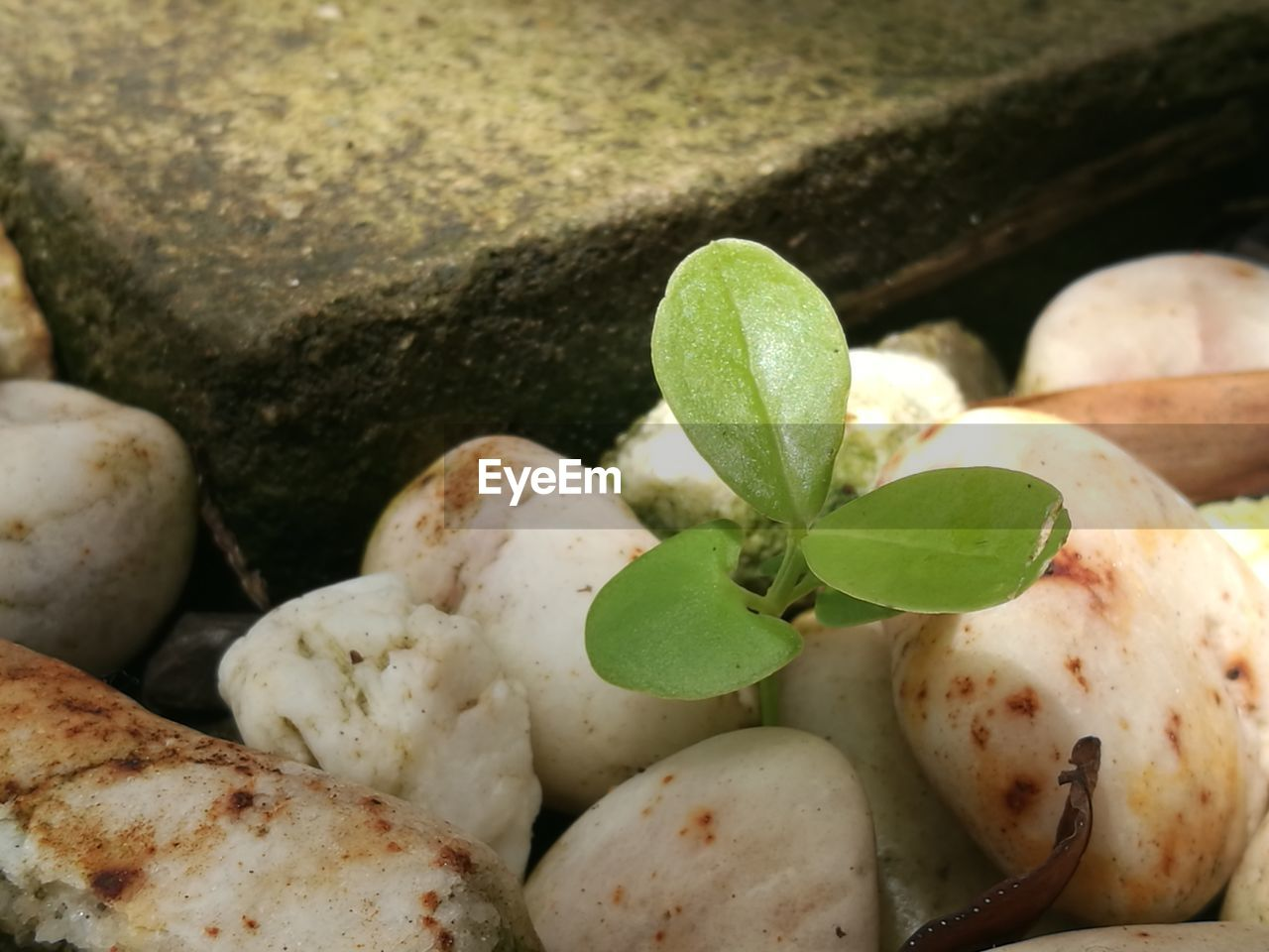leaf, plant part, close-up, no people, green color, nature, solid, food and drink, freshness, plant, food, rock, day, growth, selective focus, stone - object, still life, high angle view, healthy eating, wellbeing, pebble