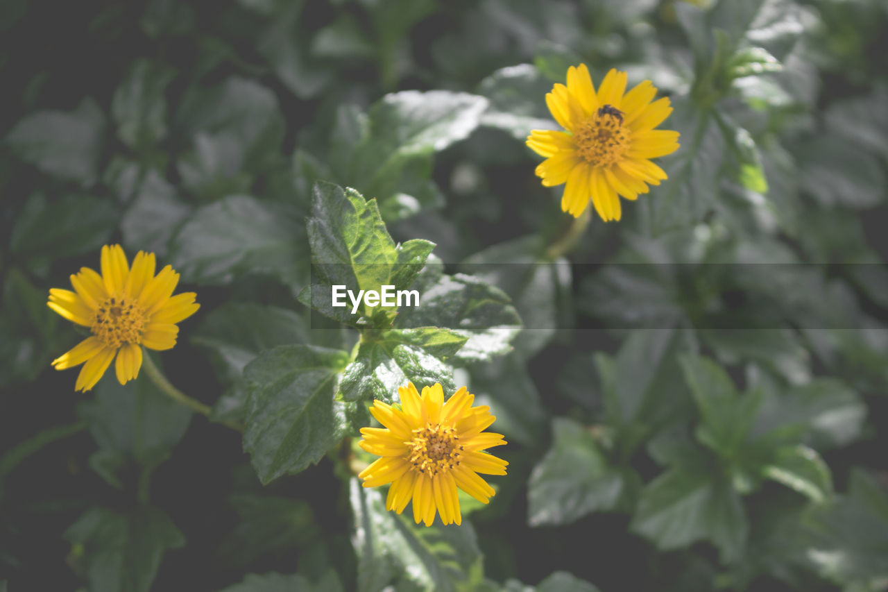flowering plant, yellow, flower, plant, vulnerability, freshness, beauty in nature, petal, growth, fragility, flower head, inflorescence, close-up, nature, plant part, leaf, no people, day, focus on foreground, pollen, outdoors