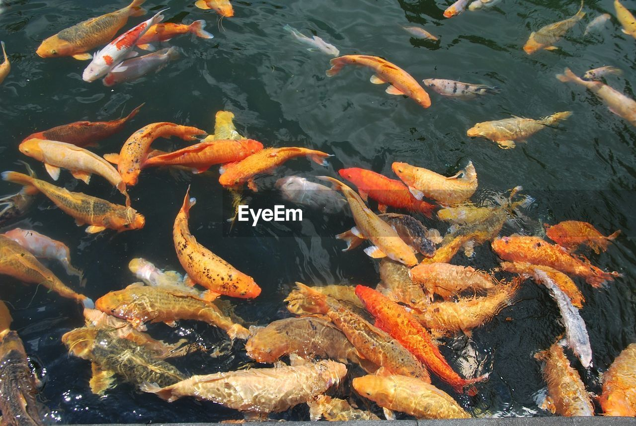 Close up of school of fish