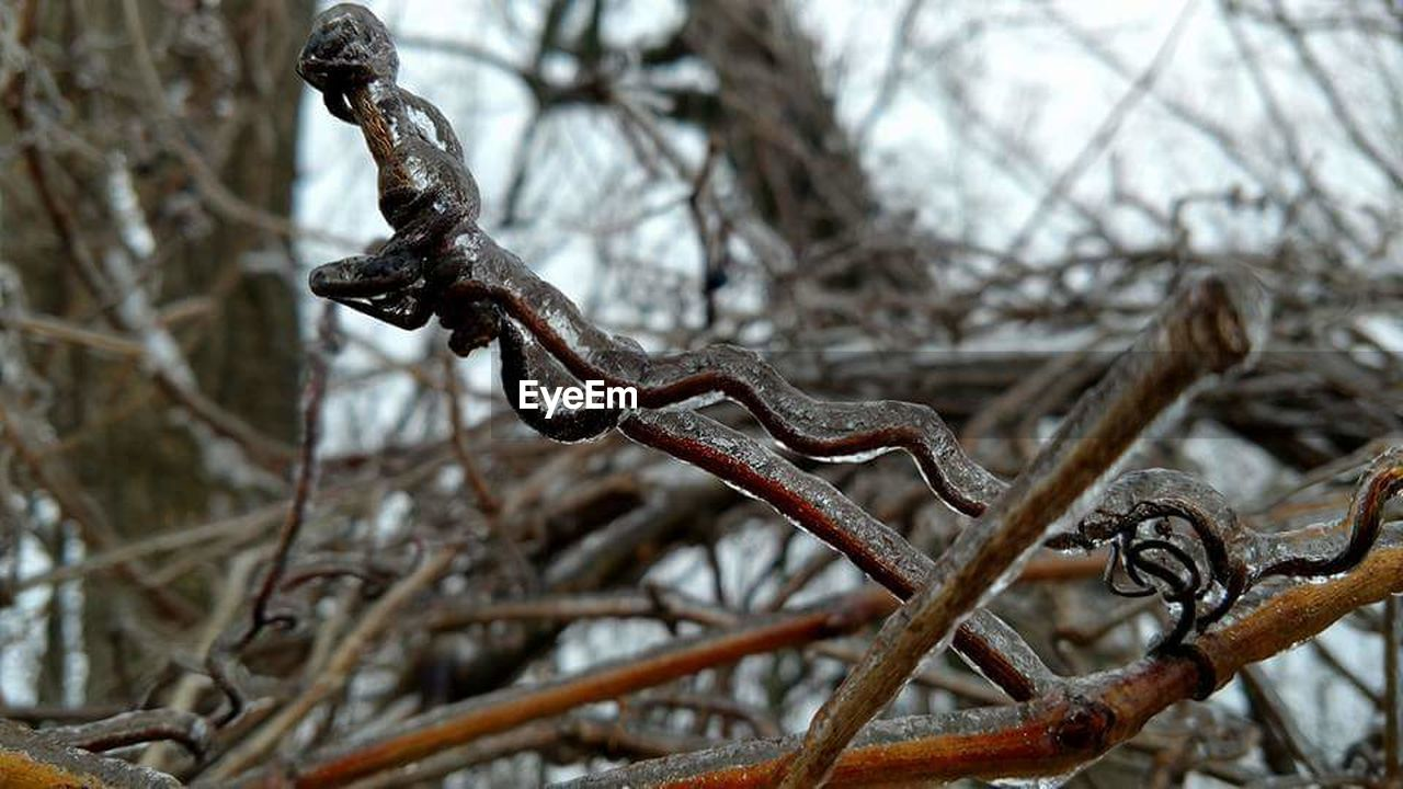 metal, focus on foreground, rusty, close-up, no people, branch, day, outdoors, nature, winter, bare tree, tree