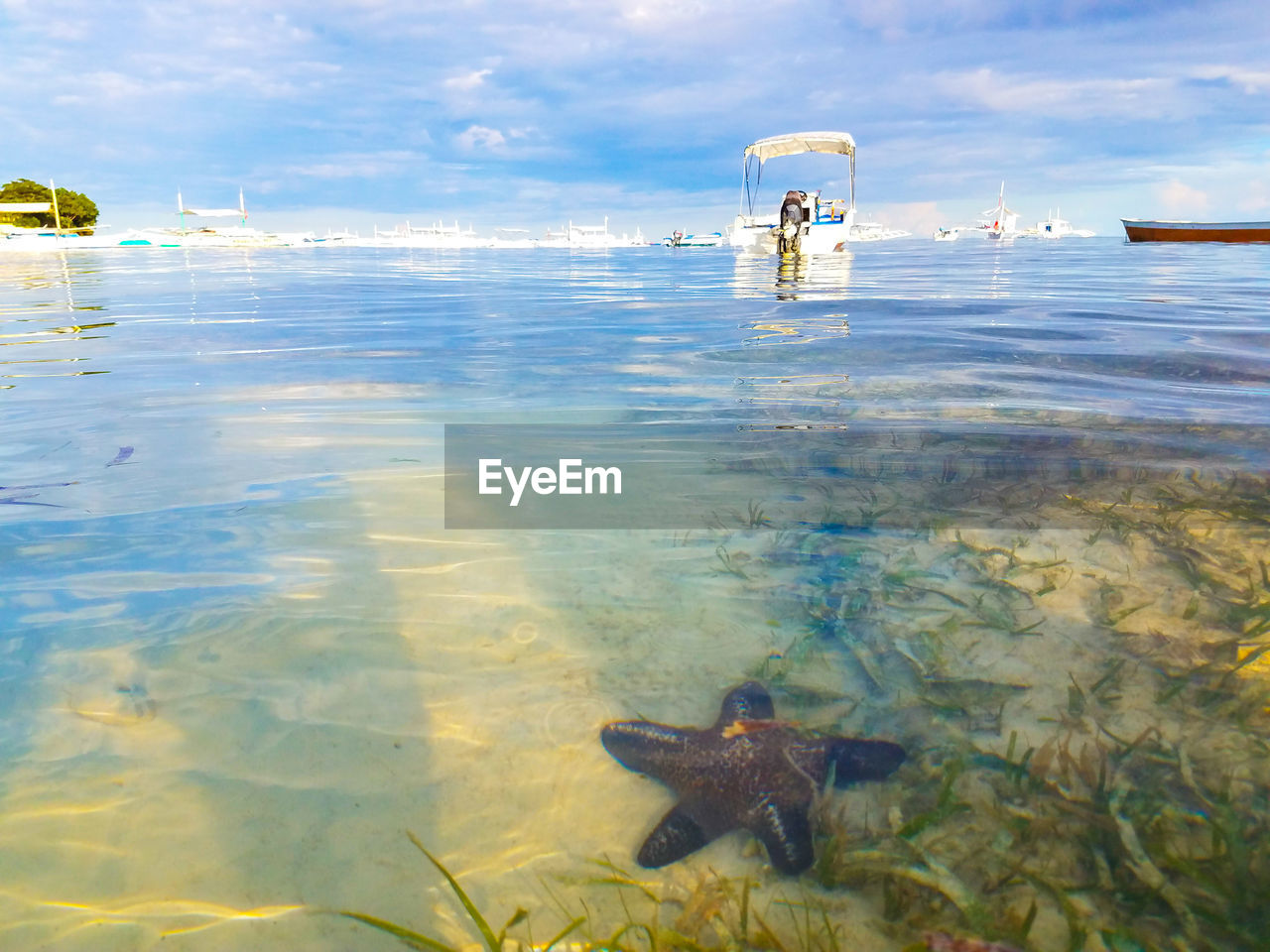 VIEW OF FISH IN SEA