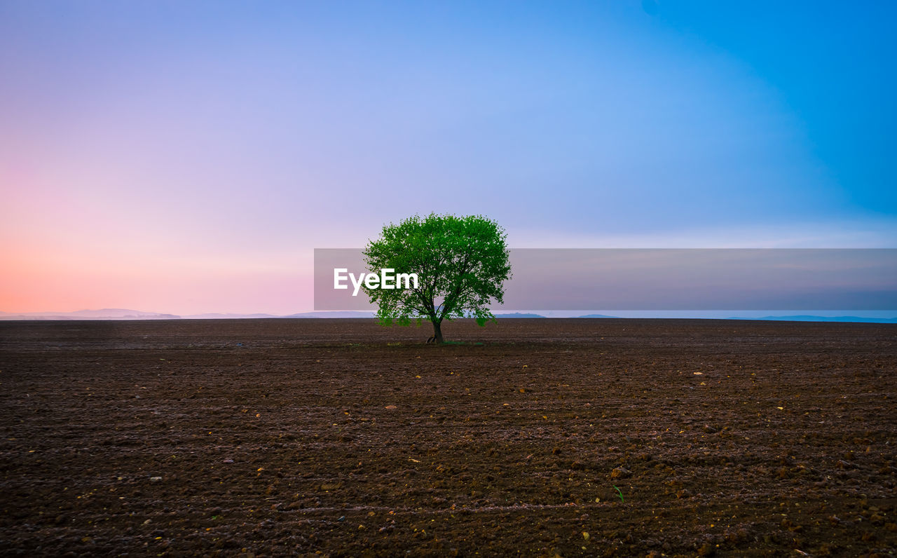 Lone tree on landscape against blue sky