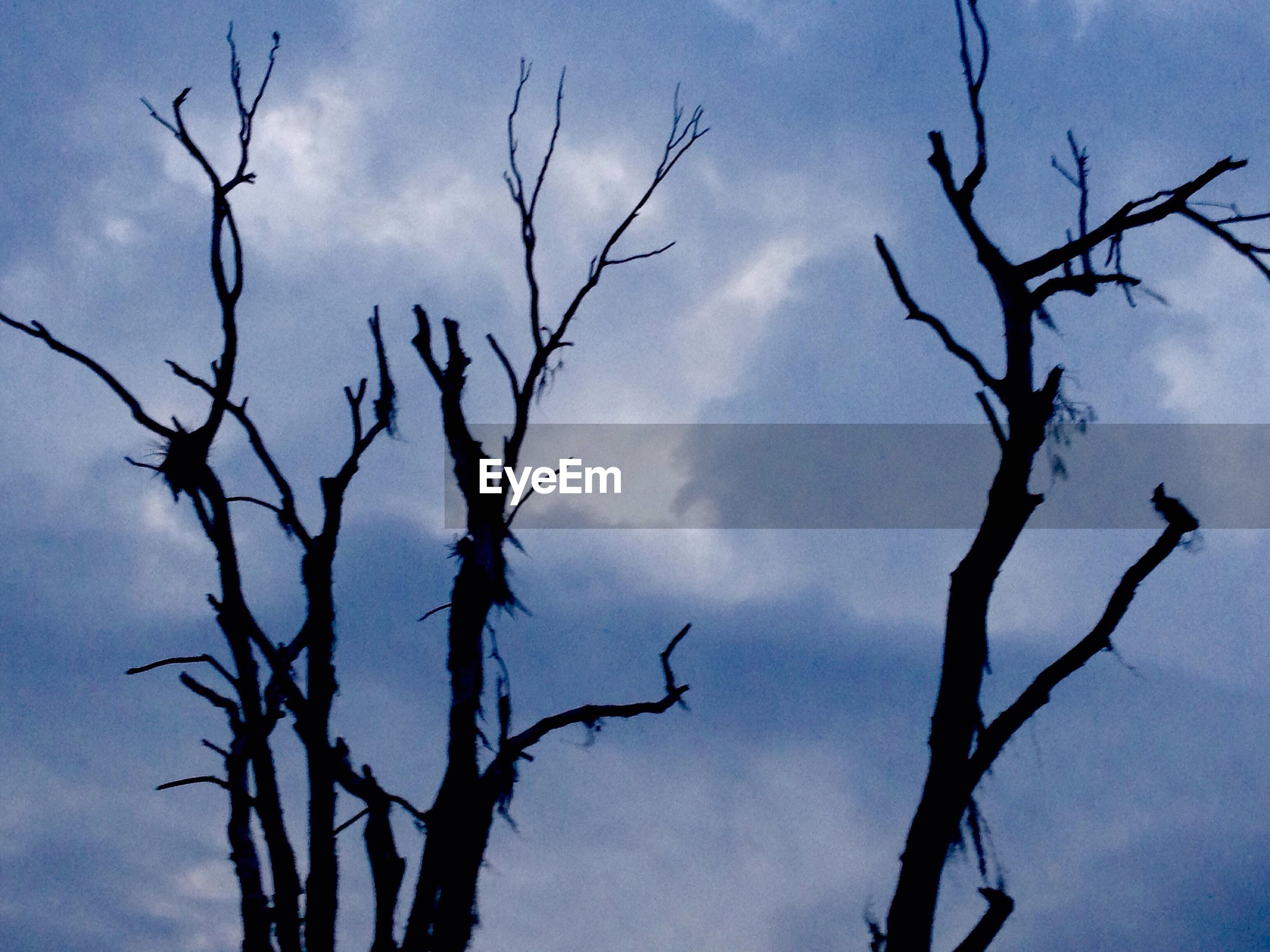 bare tree, low angle view, branch, sky, tree, cloud - sky, tranquility, nature, silhouette, beauty in nature, cloud, cloudy, scenics, tranquil scene, outdoors, no people, dead plant, blue, day, tree trunk