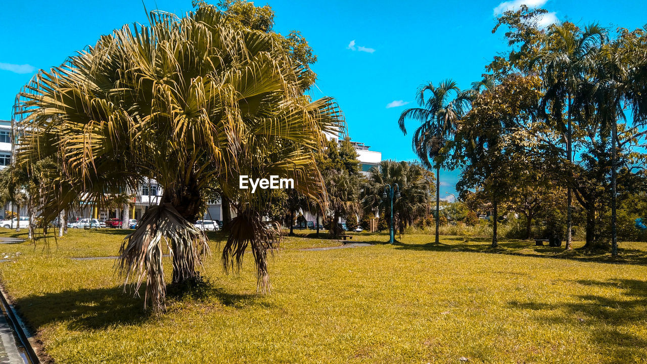 plant, tree, sky, growth, nature, land, grass, field, sunlight, day, beauty in nature, tranquility, tranquil scene, no people, outdoors, green color, palm tree, shadow, landscape, environment