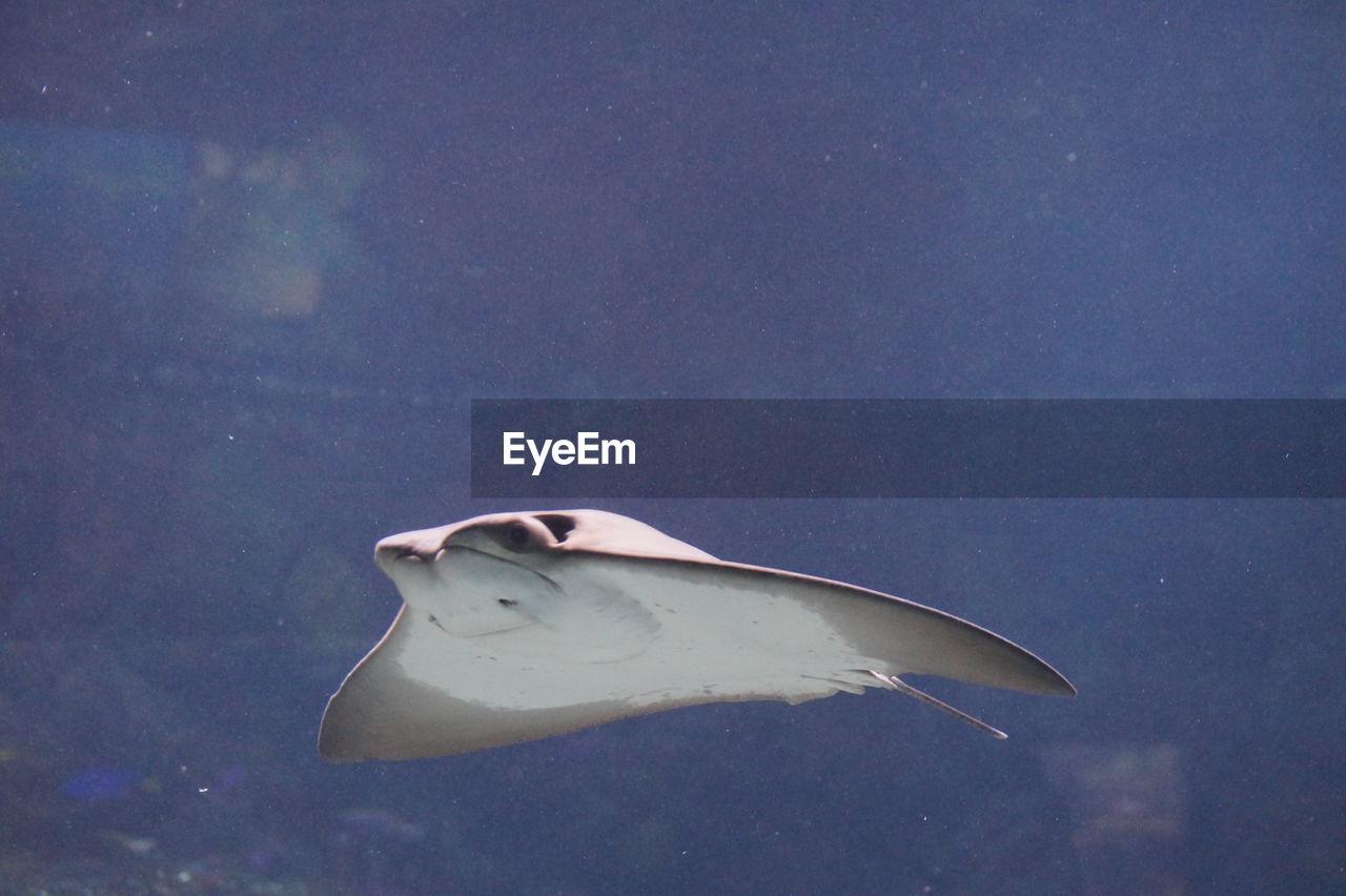 View Of Stingray Underwater