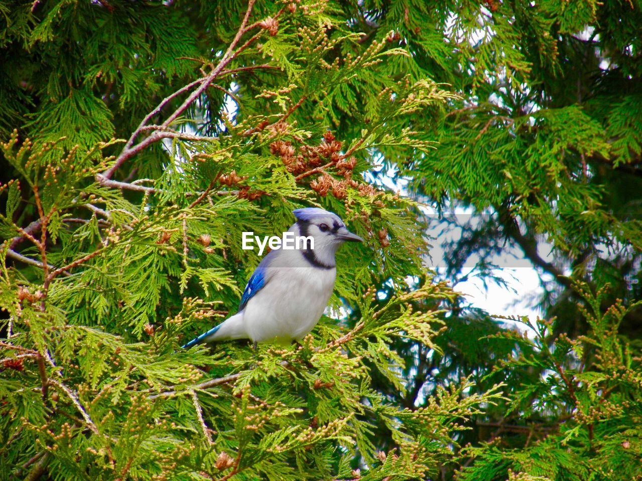 animal wildlife, animal themes, animal, vertebrate, bird, one animal, plant, animals in the wild, tree, perching, green color, day, no people, nature, growth, branch, low angle view, beauty in nature, outdoors, leaf