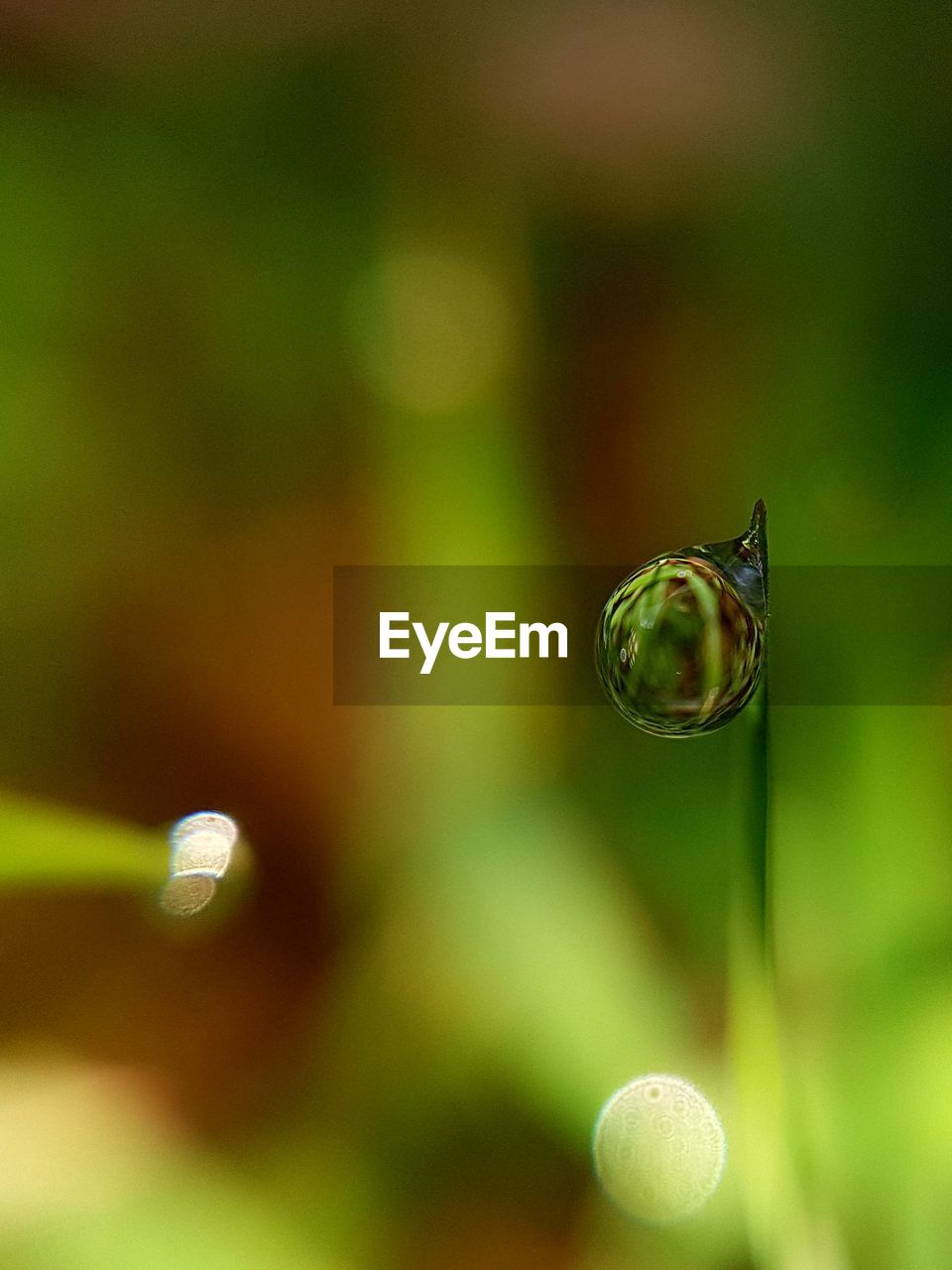 no people, close-up, focus on foreground, nature, day, outdoors, water, fragility, beauty in nature, animal themes