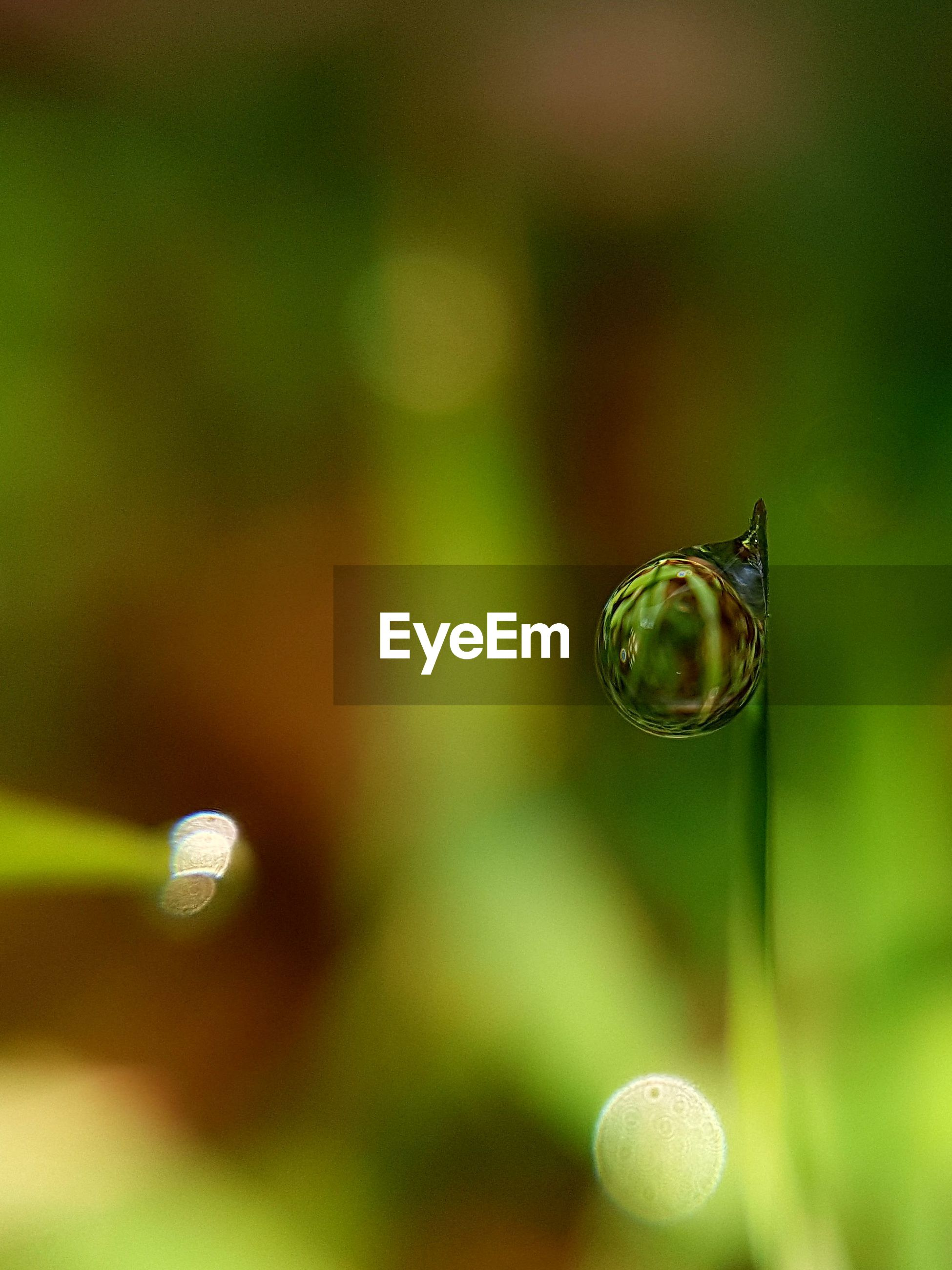 CLOSE-UP OF WATER DROP ON BLURRED BACKGROUND