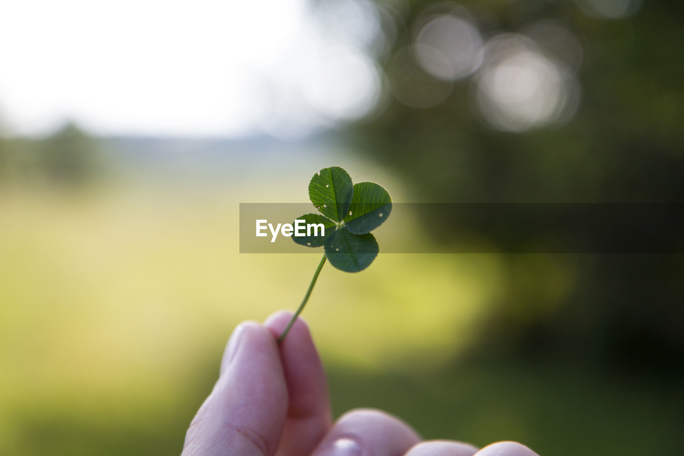 Cropped image of person holding leaf