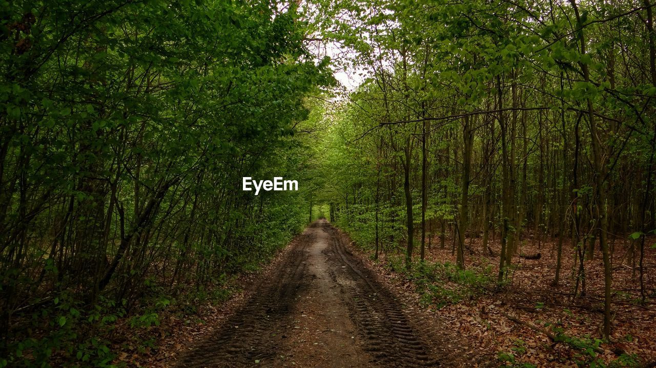 the way forward, tree, forest, nature, road, growth, transportation, outdoors, straight, no people, day, scenics, beauty in nature