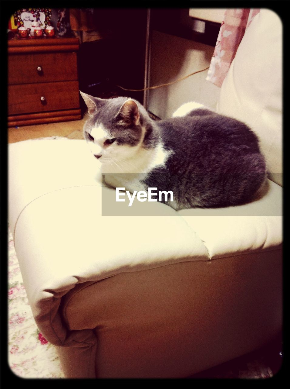 pets, domestic cat, domestic animals, one animal, mammal, animal themes, cat, feline, sitting, indoors, day, one person