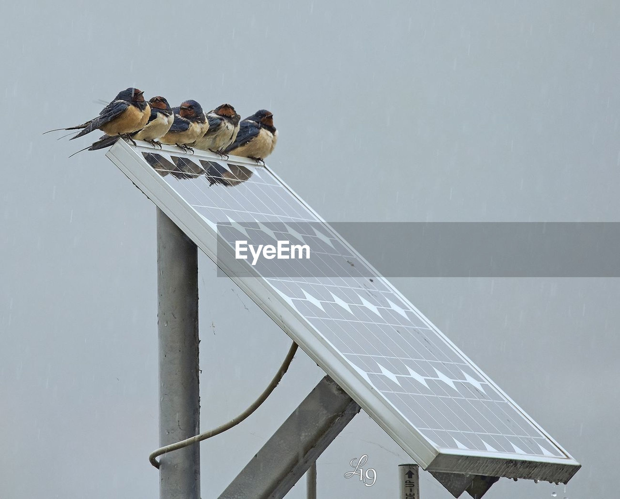 bird, animal wildlife, animal themes, vertebrate, animals in the wild, animal, group of animals, perching, no people, day, nature, sky, low angle view, outdoors, technology, renewable energy, architecture, solar energy, solar panel, fuel and power generation, power supply, animal family
