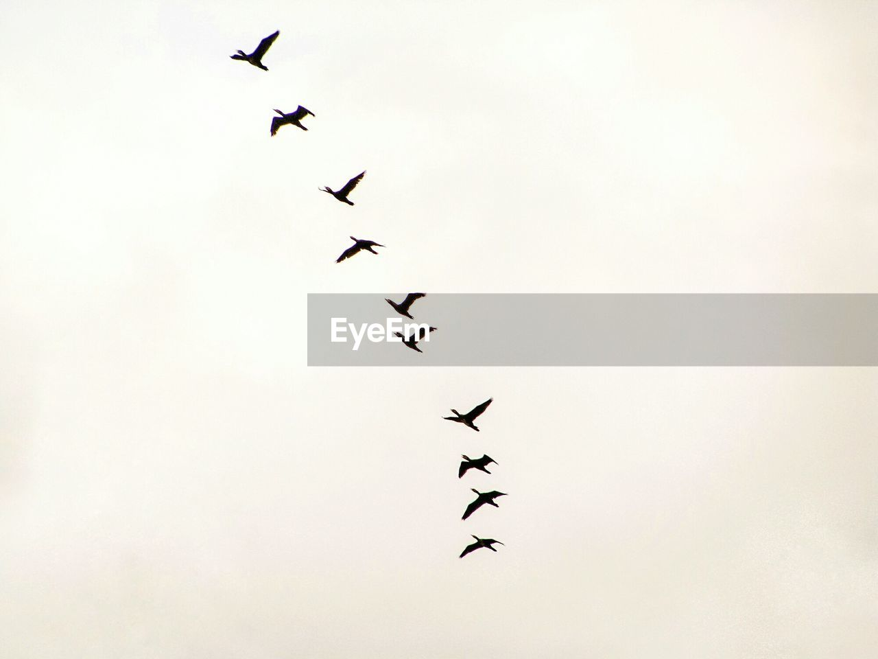 bird, vertebrate, animal, animal themes, flying, animals in the wild, group of animals, sky, animal wildlife, low angle view, large group of animals, flock of birds, mid-air, nature, no people, motion, day, order, beauty in nature, togetherness, plane
