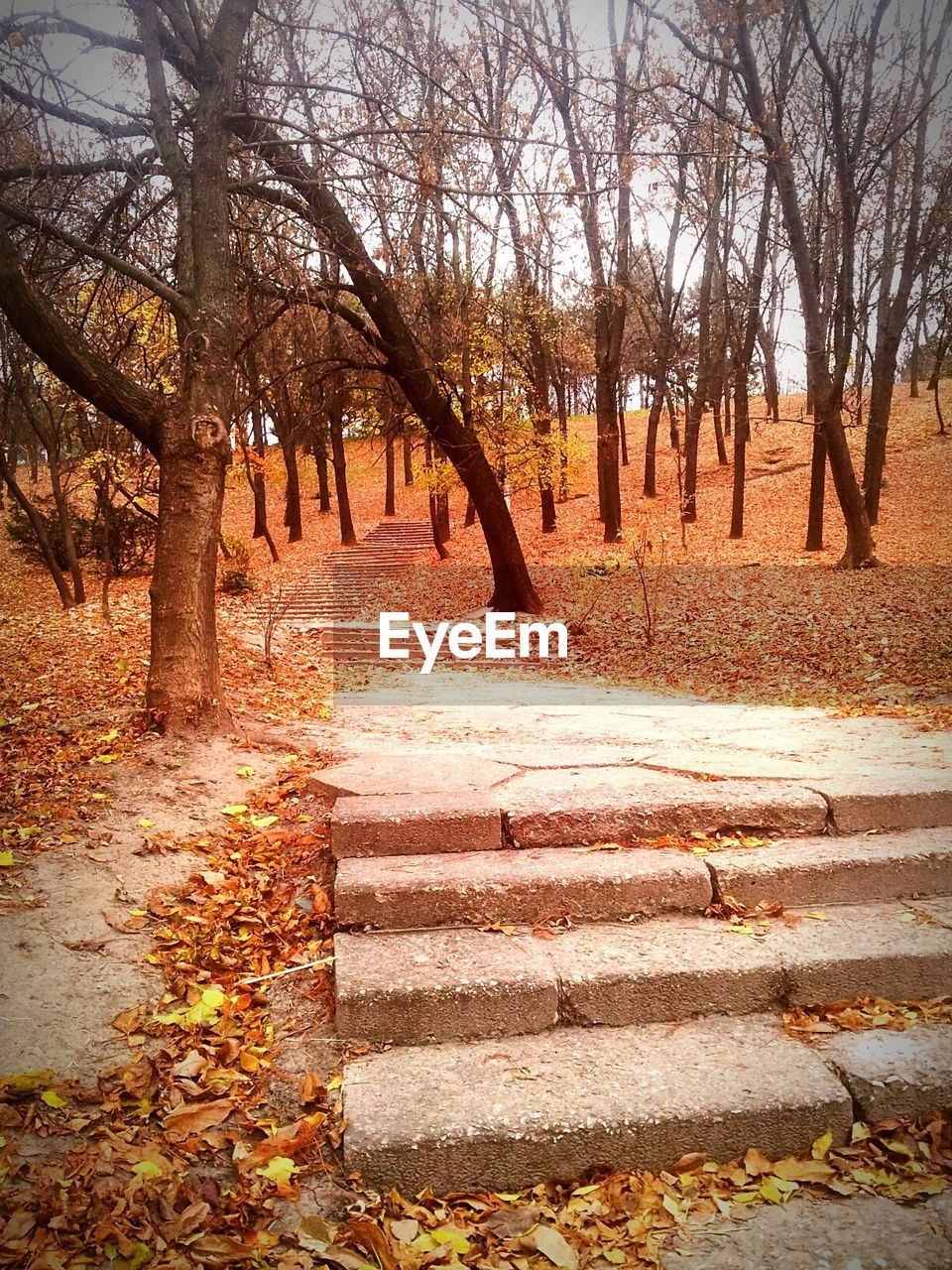 Low angle view of steps amidst trees during autumn