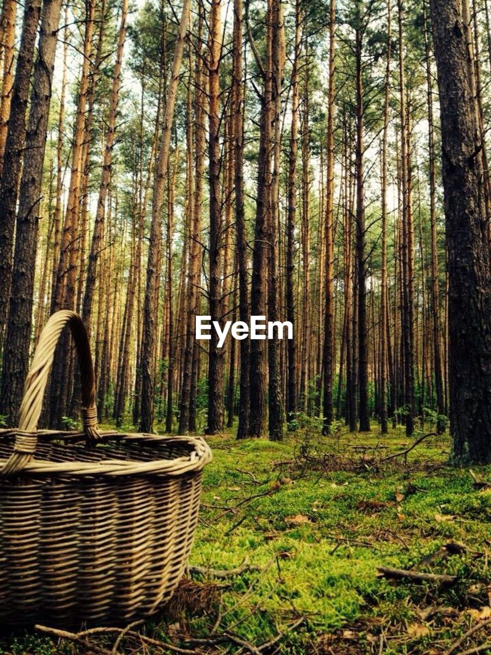 forest, tree trunk, tree, basket, nature, day, growth, no people, beauty in nature, outdoors