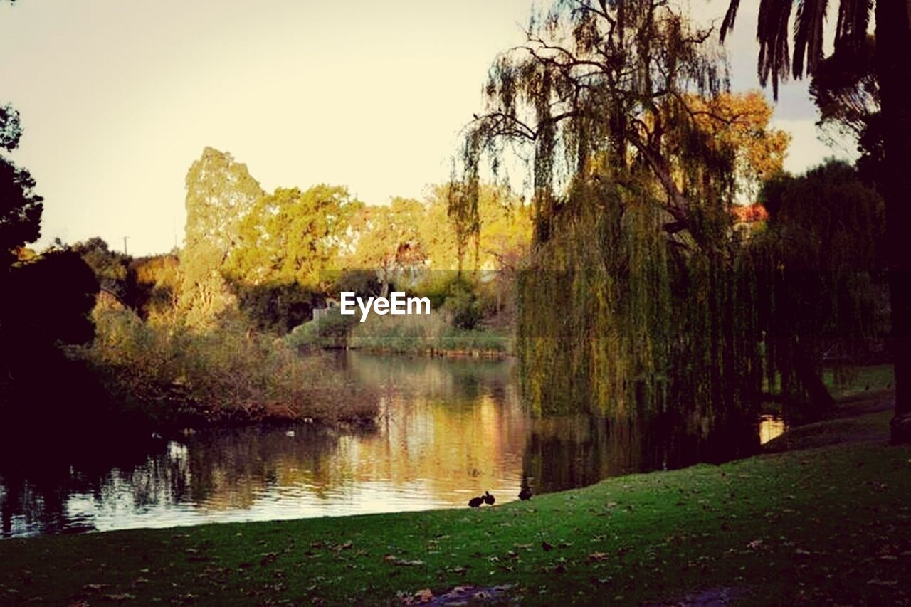tree, lake, water, nature, reflection, no people, growth, autumn, grass, clear sky, outdoors, beauty in nature, sky, day