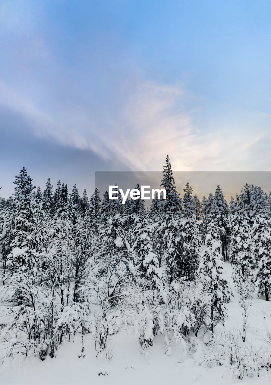 snow, tree, cold temperature, winter, plant, tranquil scene, beauty in nature, tranquility, covering, sky, scenics - nature, nature, no people, land, non-urban scene, forest, white color, frozen, environment, woodland, pine tree, coniferous tree, snowcapped mountain