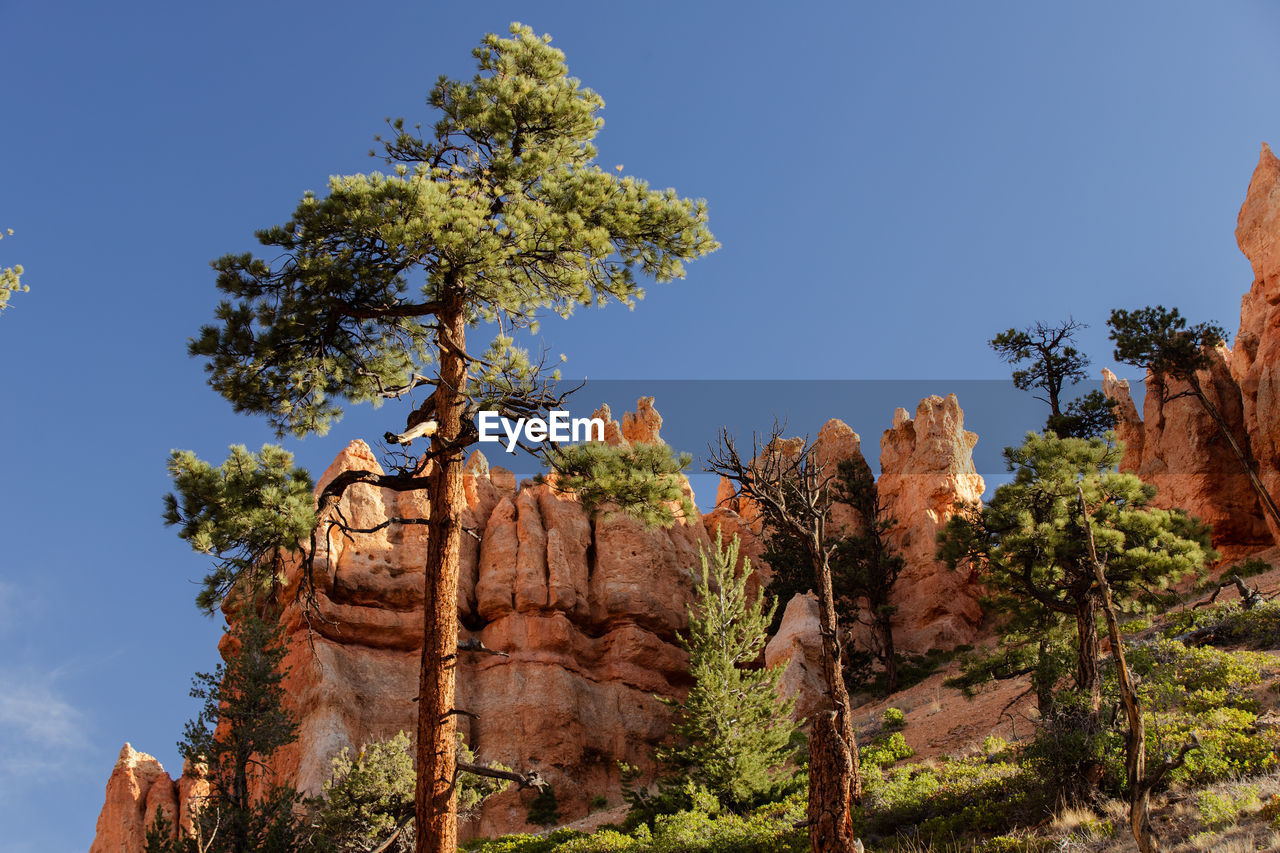 plant, tree, sky, nature, low angle view, growth, beauty in nature, day, no people, clear sky, rock, travel destinations, blue, tranquility, solid, rock formation, sunlight, history, rock - object, outdoors