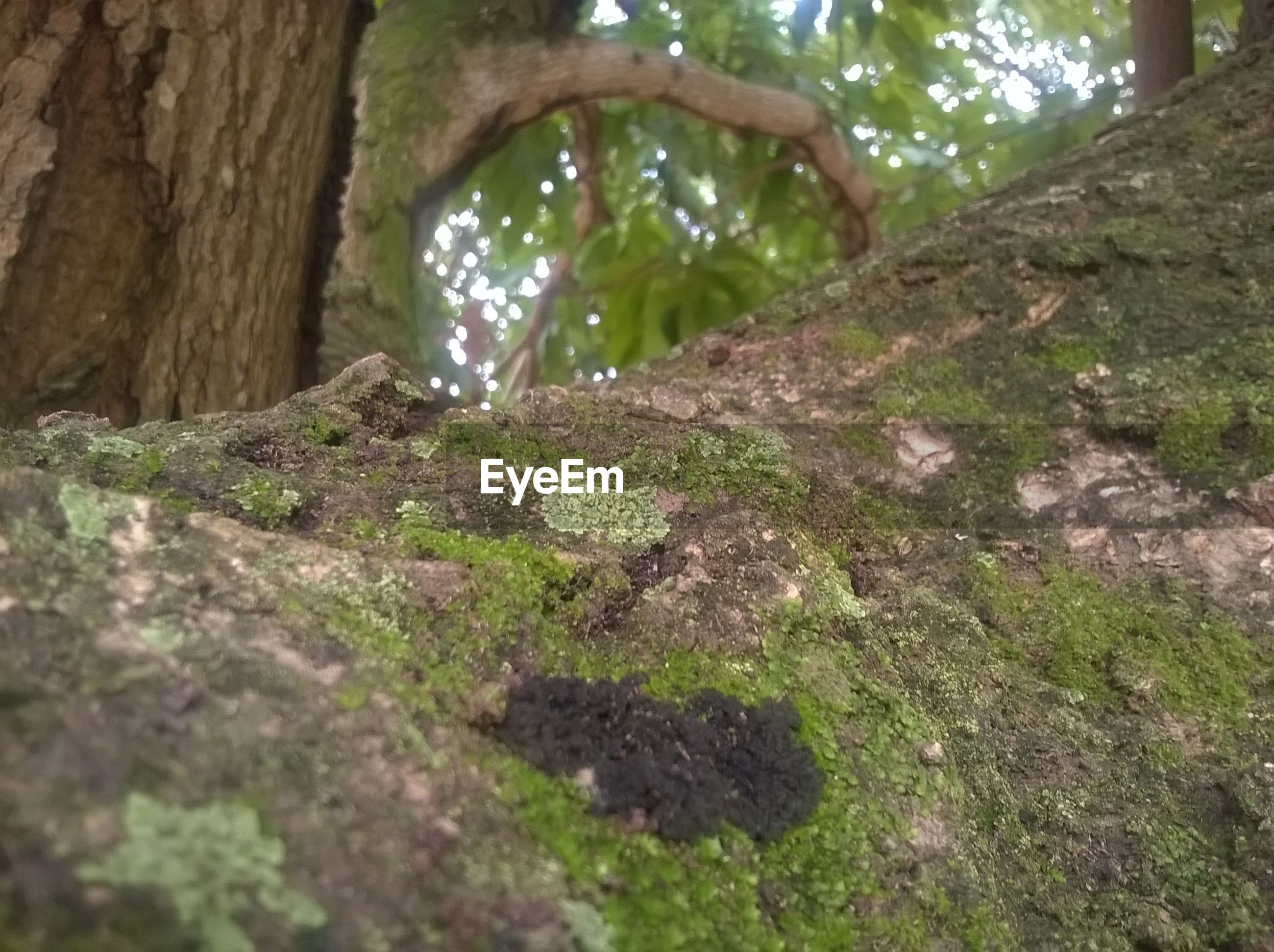 tree, nature, growth, no people, day, beauty in nature, plant, tree trunk, forest, tranquility, outdoors, branch, animal themes, close-up