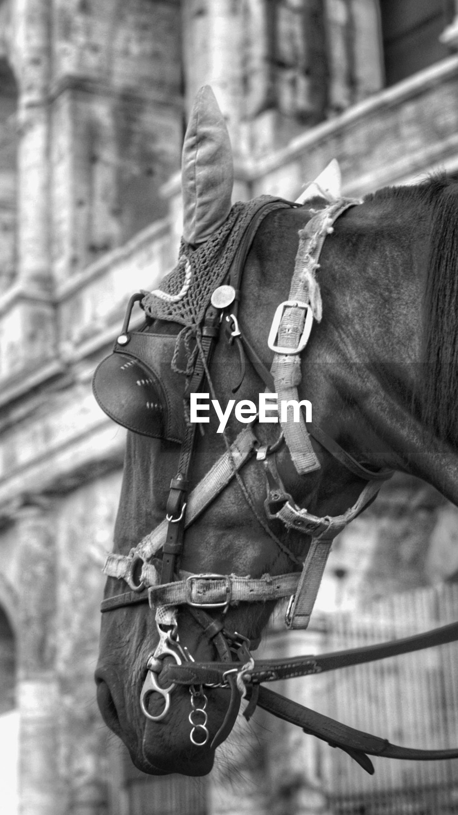 focus on foreground, lifestyles, men, leisure activity, holding, selective focus, photography themes, riding, hobbies, casual clothing, skill, photographing, technology, outdoors, day, close-up, camera - photographic equipment, musical instrument