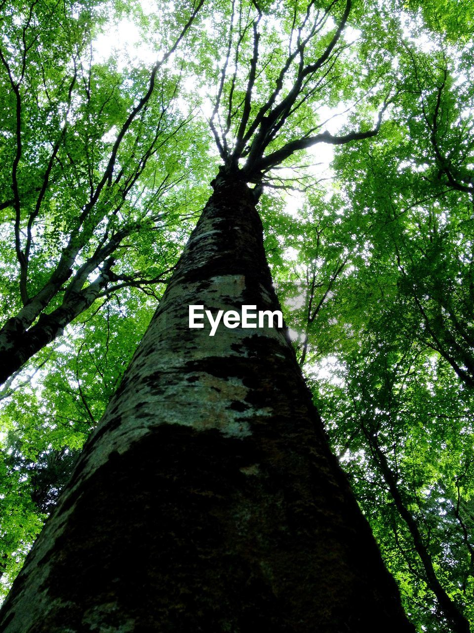 tree, tree trunk, nature, growth, low angle view, branch, forest, beauty in nature, tranquility, day, no people, outdoors