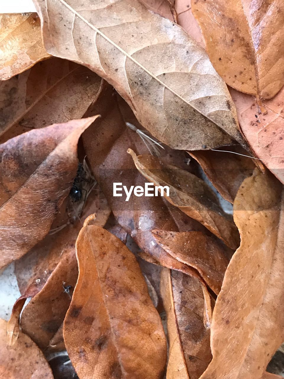 plant part, leaf, autumn, close-up, full frame, dry, backgrounds, no people, nature, vulnerability, fragility, leaves, leaf vein, change, brown, beauty in nature, plant, day, outdoors, natural pattern, natural condition, maple leaf, dried