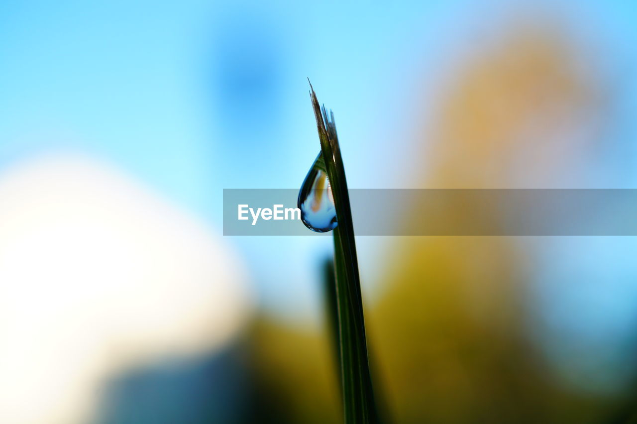 selective focus, close-up, nature, focus on foreground, day, no people, outdoors, growth