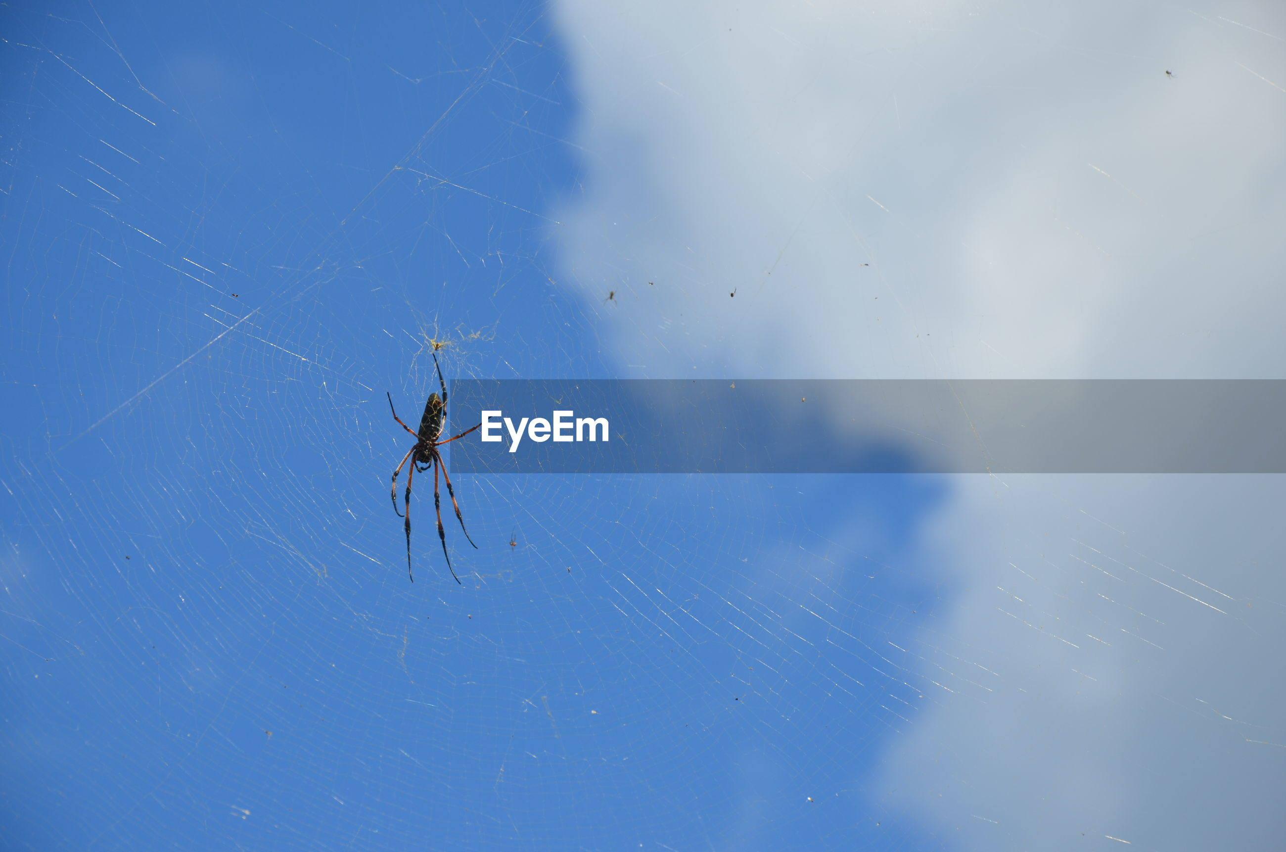 CLOSE-UP OF SPIDER AND WEB AGAINST BLUE SKY
