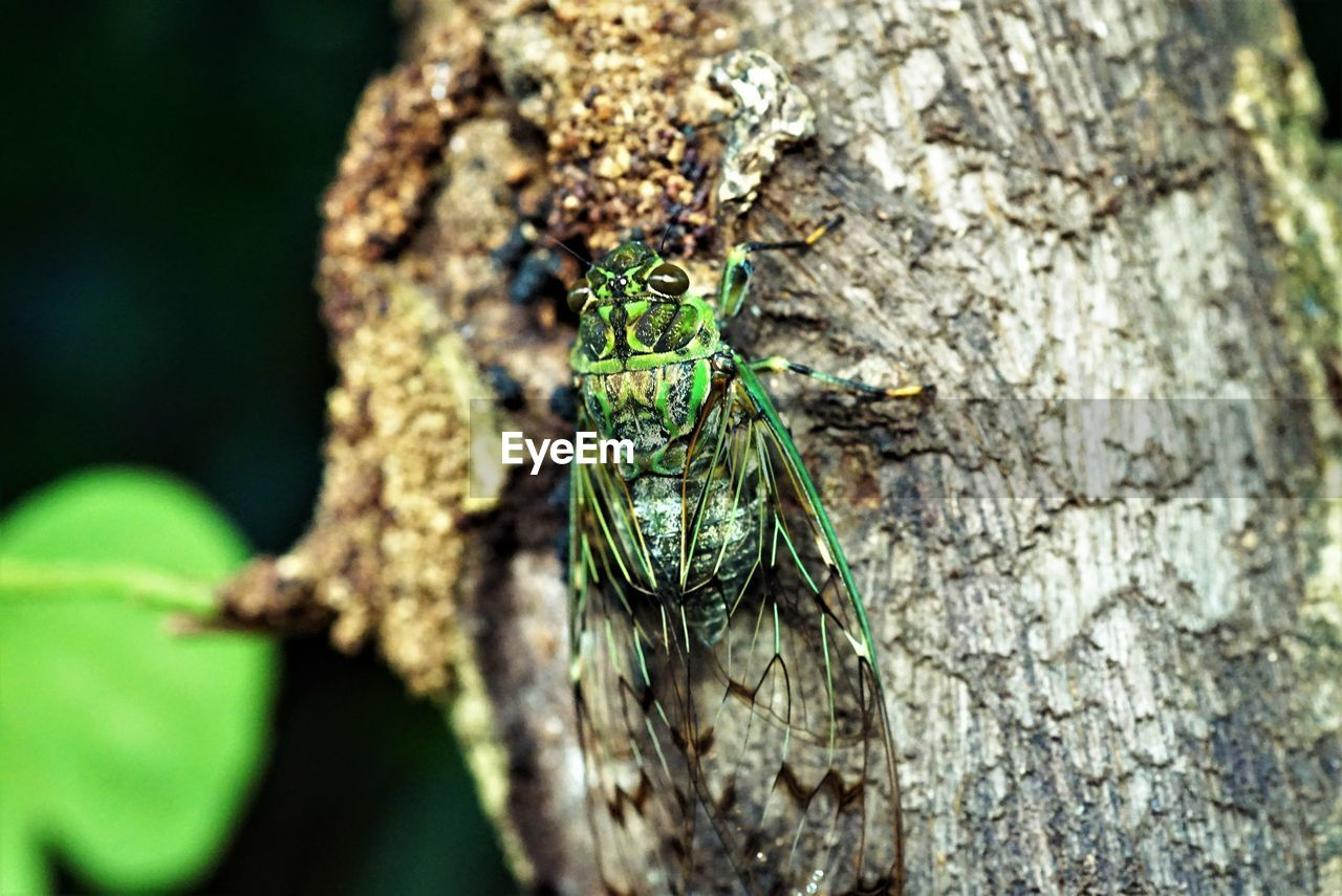 animals in the wild, animal wildlife, animal themes, one animal, animal, insect, invertebrate, close-up, tree trunk, tree, trunk, day, plant, nature, no people, focus on foreground, textured, selective focus, outdoors, green color, lichen, animal eye