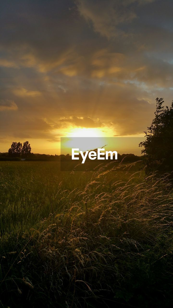 sunset, nature, tranquility, tranquil scene, sky, landscape, field, beauty in nature, scenics, sun, growth, no people, sunlight, outdoors, grass, tree, day