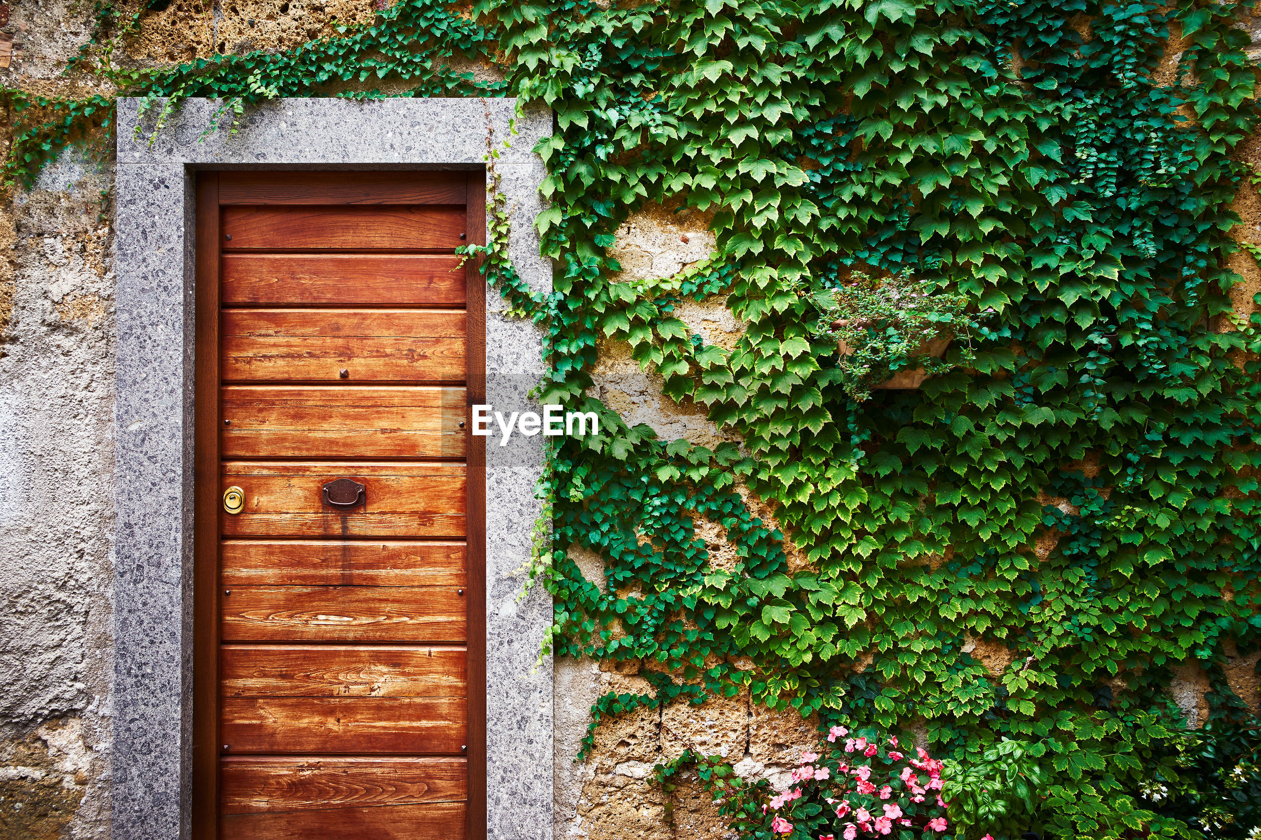 A wooden door with old wall with plants