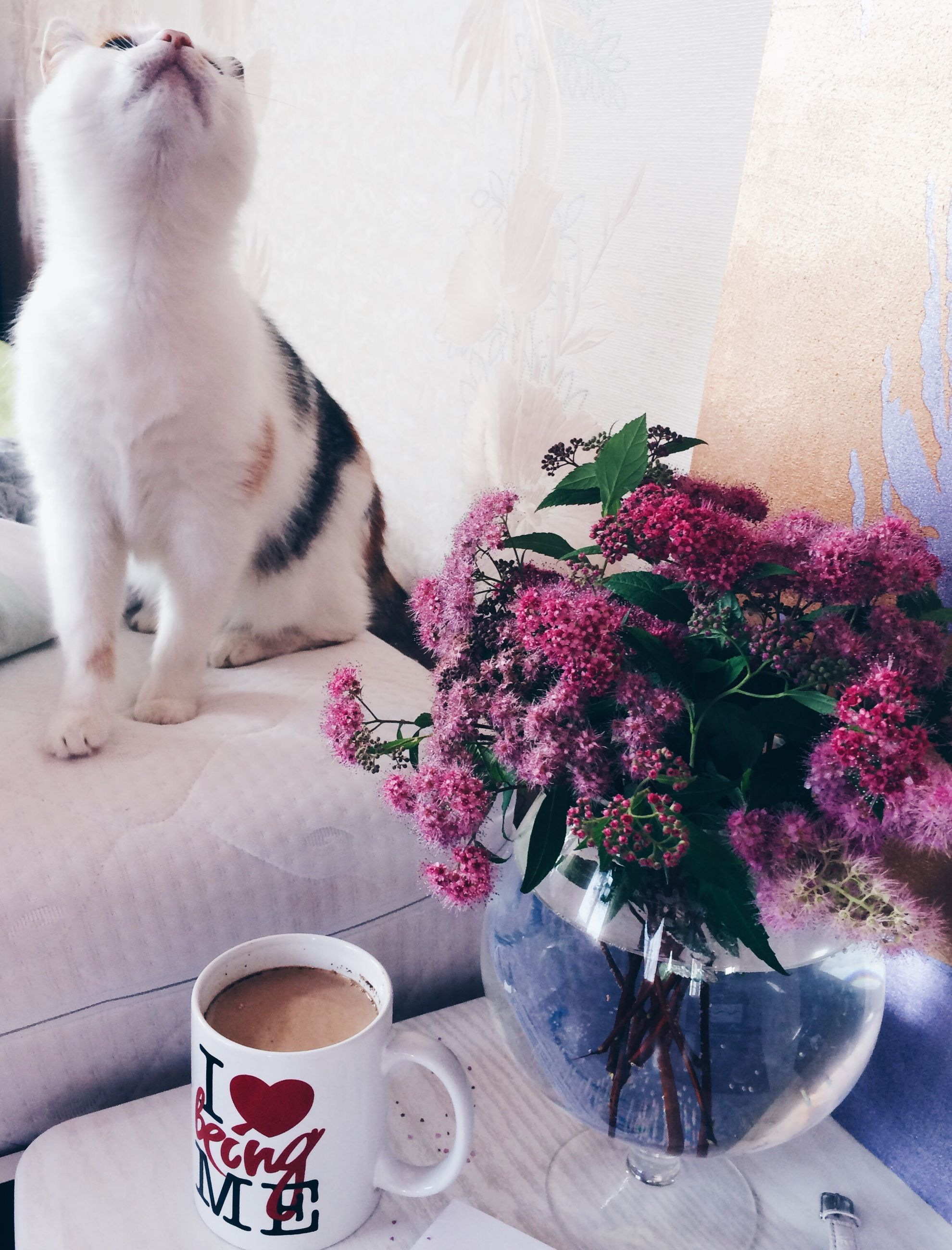 pets, domestic cat, domestic animals, one animal, flower, feline, animal themes, mammal, coffee cup, indoors, table, cat, coffee - drink, freshness, refreshment, food and drink, no people, day, nature, close-up