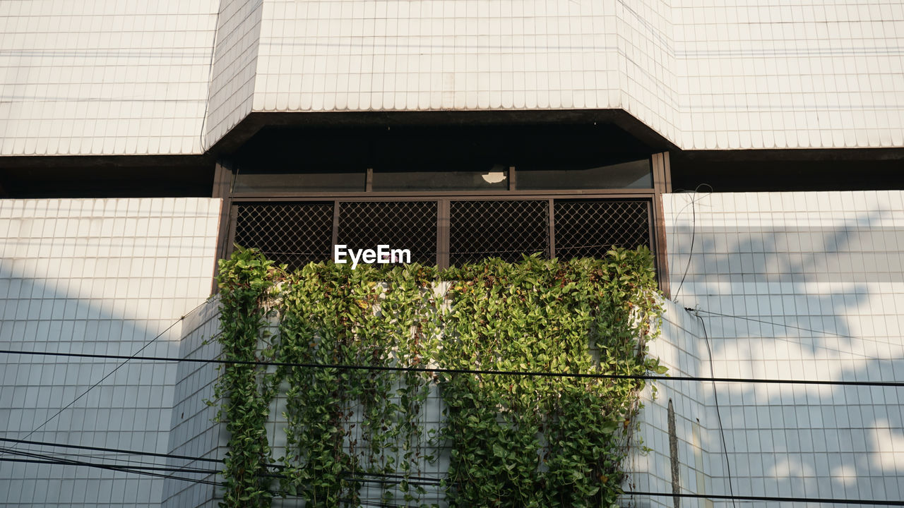 PLANTS GROWING BY BUILDING
