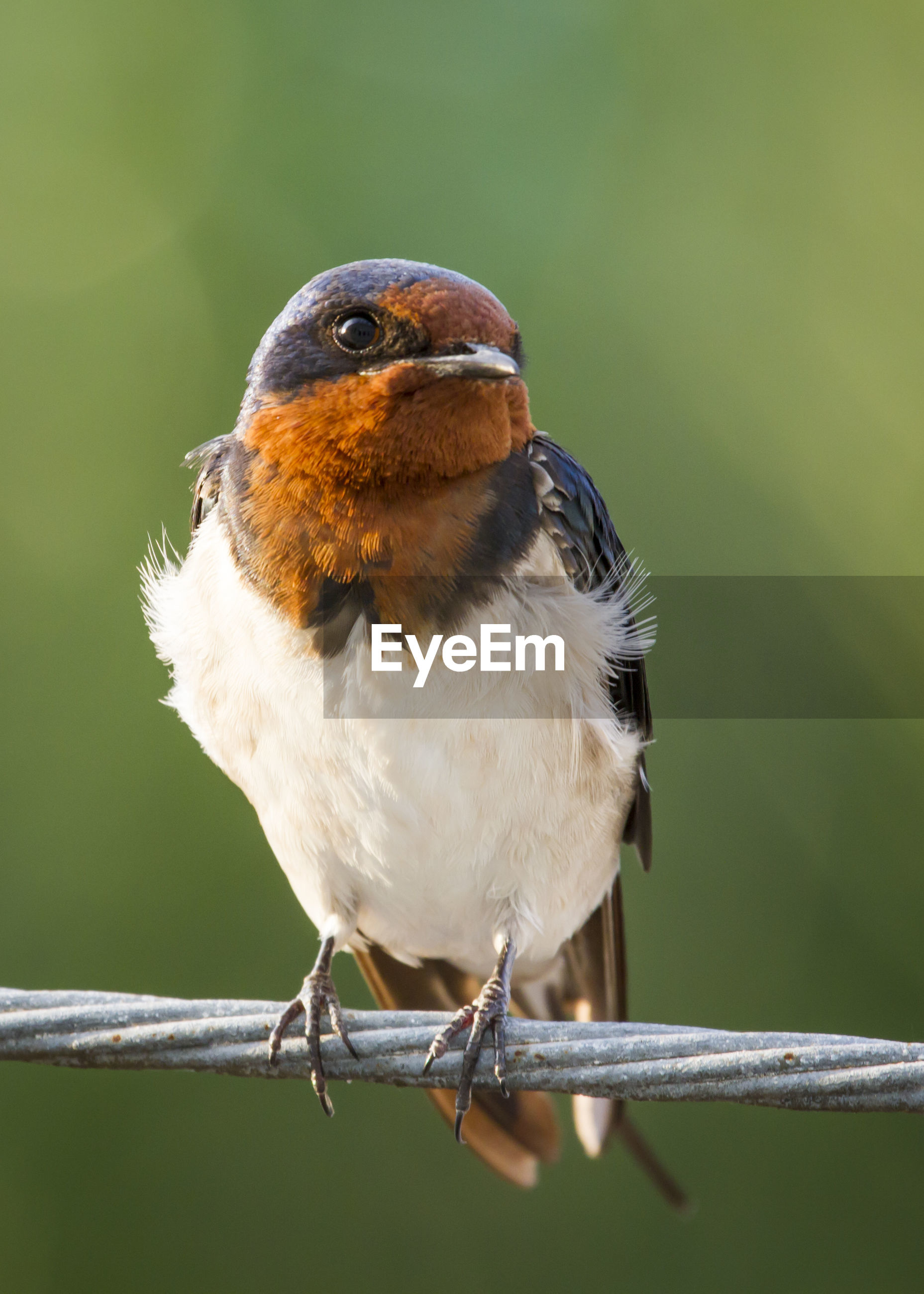 Close-up of bird perching on rope